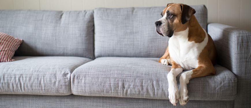 Choosing Pet Friendly Furniture